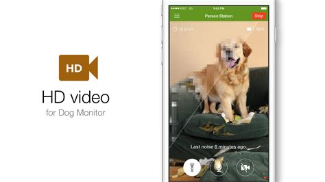 puppy monitor monitor gets hd and improved audio
