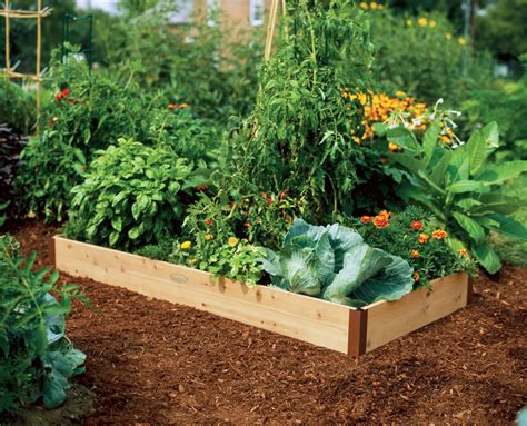 Starting A Raised Bed Vegetable Garden Faqs Vegetable Raised Garden Beds