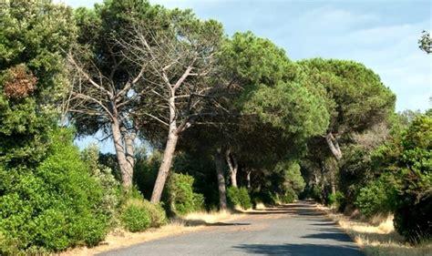 servizio giardini roma ostia una task per manutenzione verde per