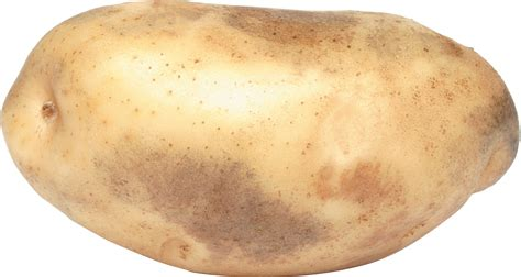 Potato Images by Potato Png Image Free Picture
