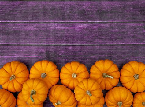 Pumpkin Costume Halloween - stock photography images that define halloween little jack marketing