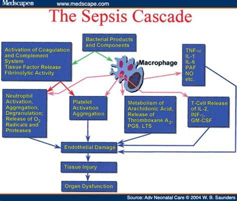 sepsis flowchart sepsis pathophysiology pathophysiology flowcharts