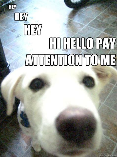 Pay Attention To Me Meme - pay attention to me lookies pinterest