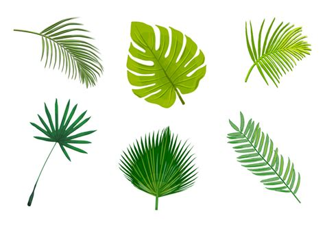 palm leaf pattern vector palm leaf isolated vectors download free vector art