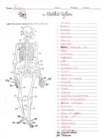 skeletal system worksheet answers worksheet amp workbook site