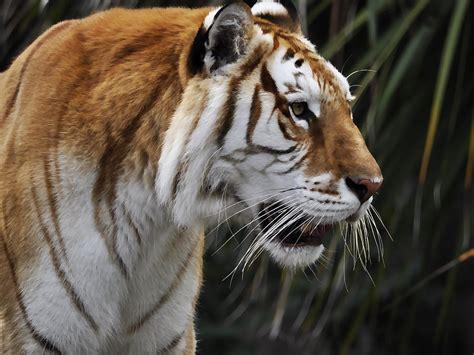 cinnamon tiger cinnamon photograph by marie terry