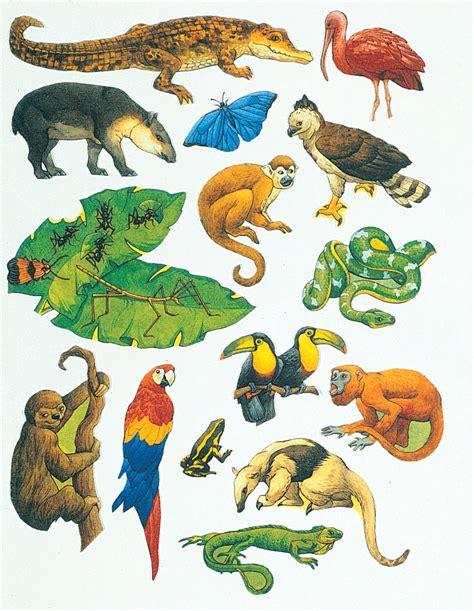 printable rainforest animal pictures rainforest animals clipart clipart suggest