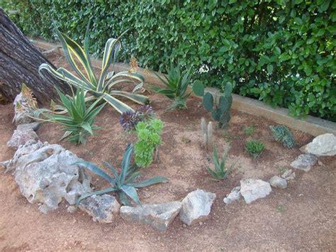 piante grasse giardino piante grasse da esterno piante per giardino piante