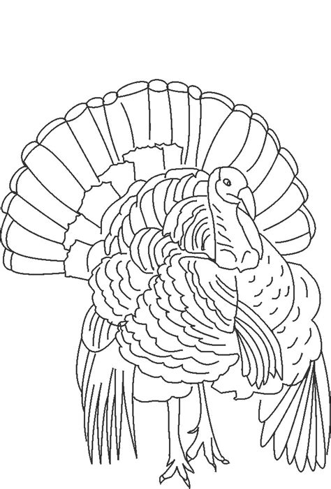 coloring page wild turkey wild turkey coloring pages az coloring pages