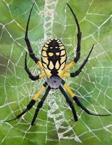 Garden Spider Vs Orb Weaver by Uakari Is The Common Name For The New World Monkeys Of The