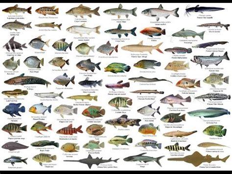 download mp3 gratis gigi ikan laut 6 43 mb jenis jenis ikan di laut stafaband download