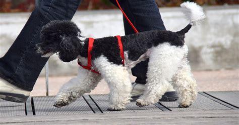 legge sull ingresso dei cani nei luoghi pubblici cani nei luoghi pubblici legge beautiful cani nei luoghi