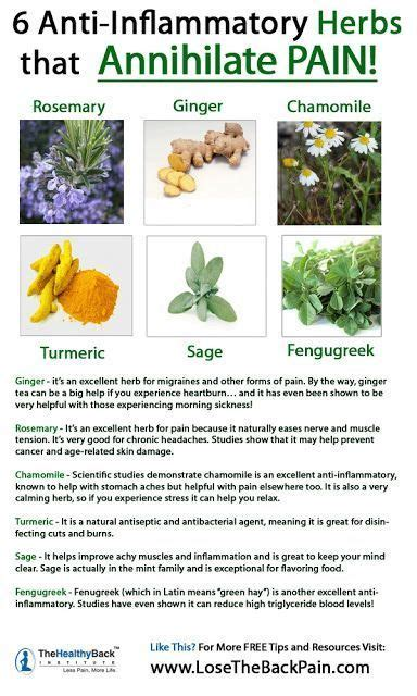 best medicine for inflammation 457 best images about heal thyself plants on pinterest