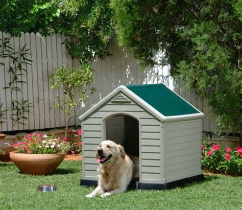 whats a good house dog get your backyard ready for the season