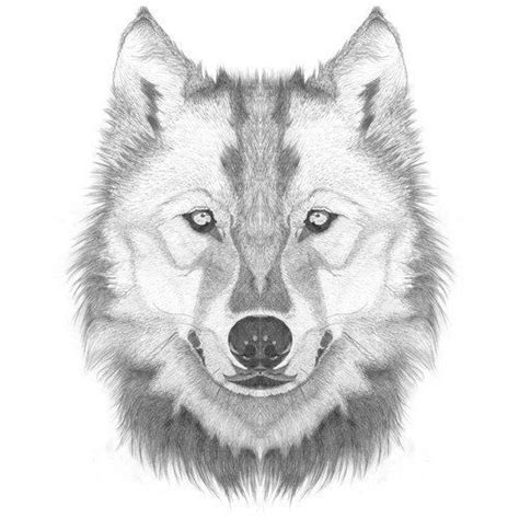 how to draw a wolf head step by step lesson click pic