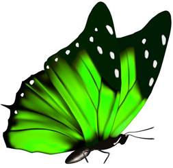 Gallery free clipart picture butterflies png green butterfly png