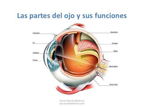 imagenes de ojos humanos y sus partes partes del ojo
