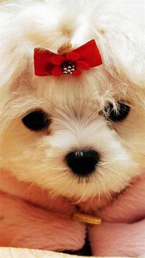 cute wallpapers hd for whatsapp 30 cute whatsapp wallpapers for download cult of digital
