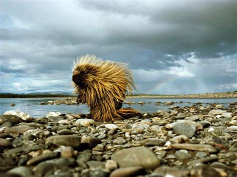 imagenes extraordinarias naturaleza incre 237 bles im 225 genes de animales ecolog 237 a taringa