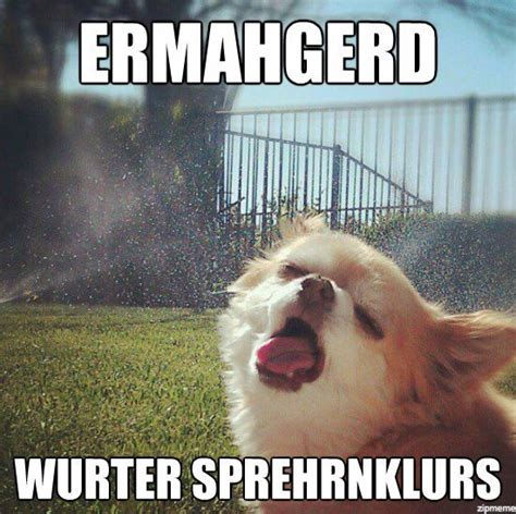 Ermahgerd Animal Memes - ermahgerd dog weknowmemes