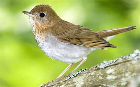 bird bing images