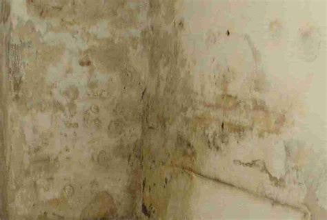 Feuchter Keller Was Tun 3596 by Feuchter Keller Was Tun Feuchter Keller Das K Nnen Sie