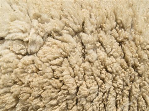 Image result for wool