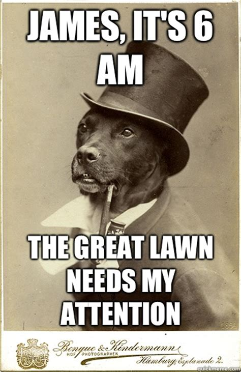 Benson Dog Meme - james it s 6 am the great lawn needs my attention old