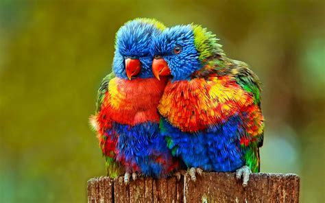 most beautiful colors parrot talking to it 39 s friends most beautiful colorful