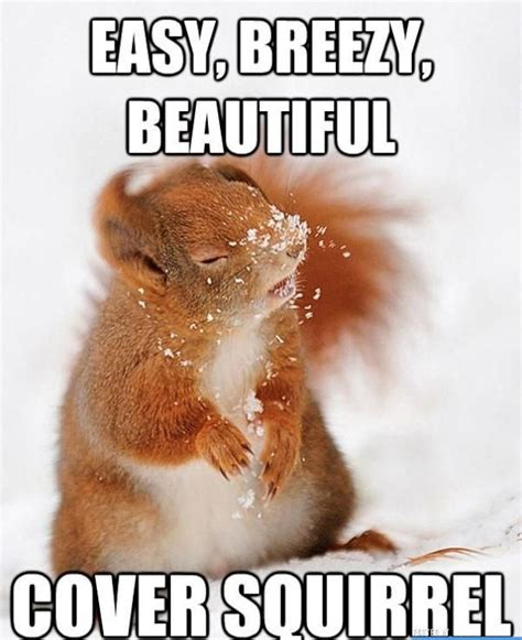 Funny Meme Cover Photos - cover squirrel funny pictures quotes memes jokes