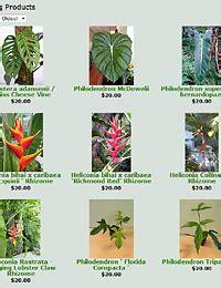 biggest online plants store african rainforest plants list