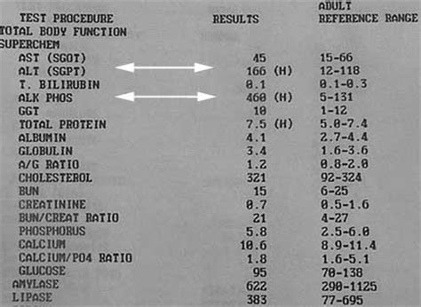 elevated liver enzymes in dogs cushing s disease hyperadrenocorticism