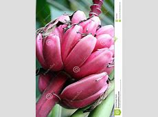 Pink Banana Royalty Free Stock Photo - Image: 16079905 Yellow Abstract Background