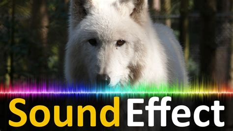 howling sounds sound effect wolves howling wolf howl