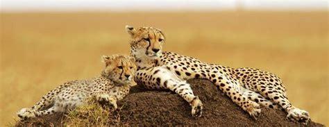 Syari Kanita kenia safari co warto wiedzieć