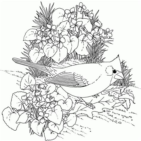 coloring pages for adults nature coloring adult info