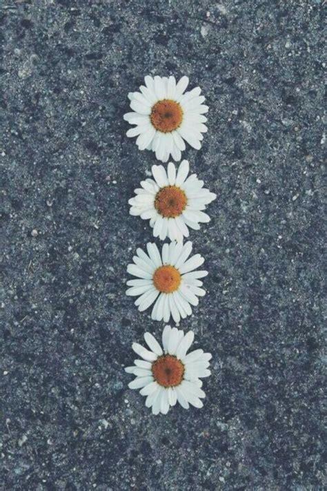 imagenes tumblr margaritas margarita flower tumblr