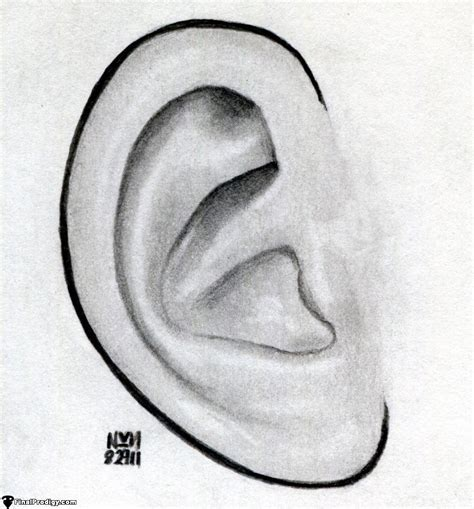 Drawing Ears by Easy Ear Drawing Www Pixshark Images Galleries