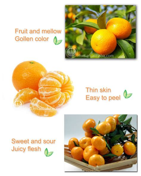 fruit list www pixshark images galleries with list of orange colored fruits www pixshark images