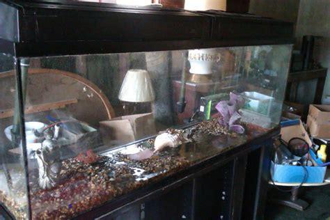 aquarium hood design 100 gallon aquarium hood aquarium design ideas