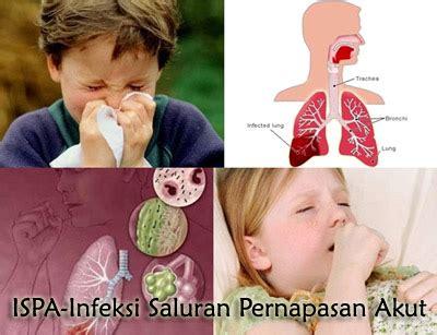 Obat Penyakit Kuning Anak Dan Dewasa Walatra Gamat Kapsul obat ispa untuk anak dan dewasa rafa herbal