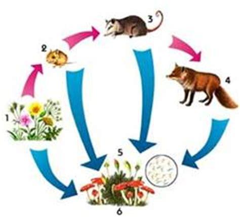 cadenas alimentarias de ordesa primer a 209 o biolog 205 a