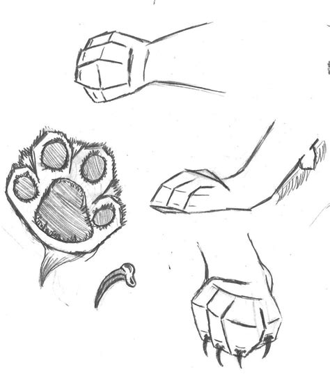 draw cat paws interesting instruction  beginners