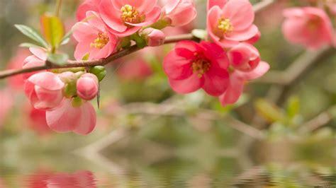 Order Flowers by Order Flowers Wallpaper