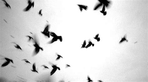 black and white aesthetic black white aesthetic tumblr c b w pinterest