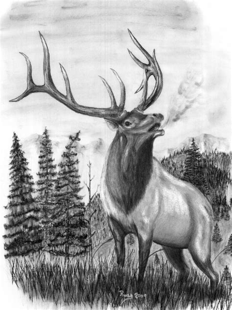 elk head clip art elk horn drawings http www charcoal