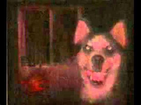 imagenes de smiledog jpg smile dog youtube
