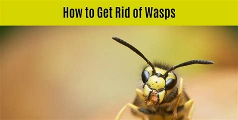How To Get Rid Of Wasps In Backyard by How To Get Rid Of Spiders Inside And Outside The House