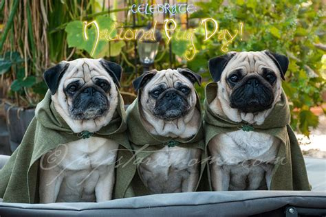 pug of the rings lord of the rings pugs