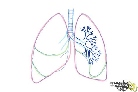 how to draw a system diagram how to draw lungs drawingnow